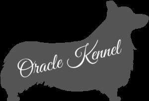 Oracle Kennel Allevamento Corgi Chiusa di San Michele Torino