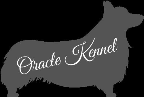 Allevamento Corgi Oracle Kennel